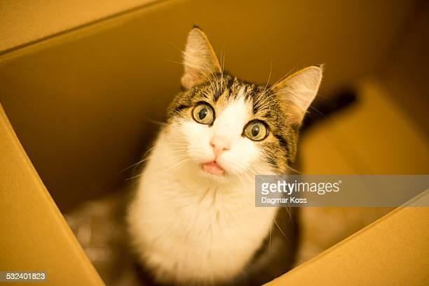 Cat inside box, indoor