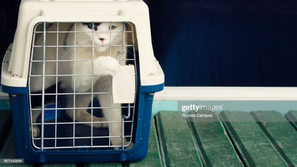 Cat Inside Cat Carrier Tries To Open The Door, Close Up : Stock Photo