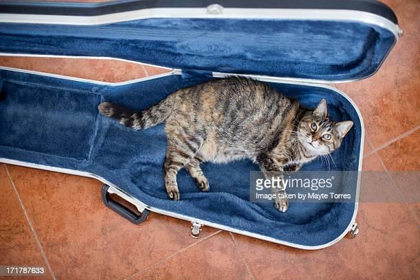 Cat inside guitar case