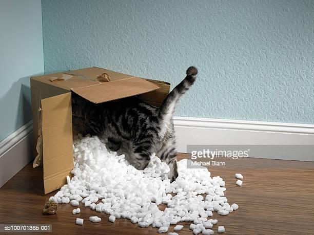 Cat inside removal box