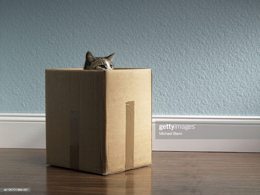 Cat inside removal box : Stock Photo