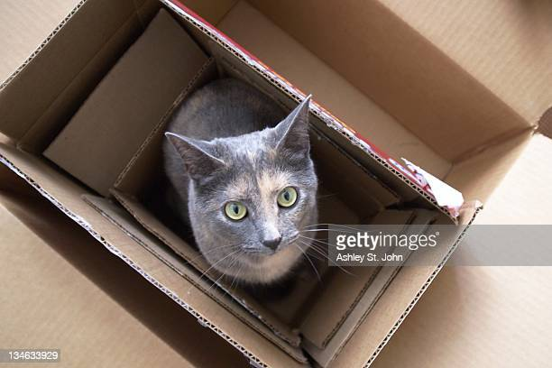 Cat inside several cardboard boxes