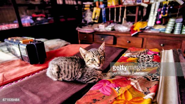 cat, inside shop - traditionally portuguese stock pictures, royalty-free photos & images