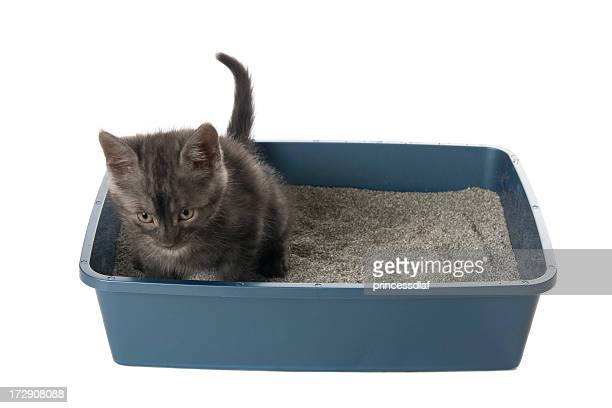 a cat inside the litter box isolated in white - litter box stock photos and pictures