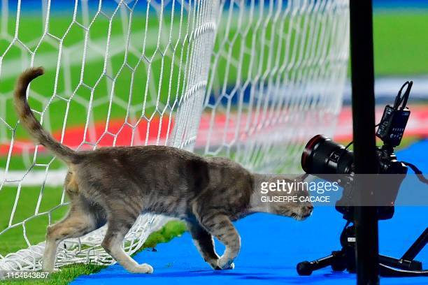 Cat inspect the remote cameras during the 2019 Africa Cup of Nations Round of 16 football match between Ghana and Tunisia at the Ismailia Stadium in...