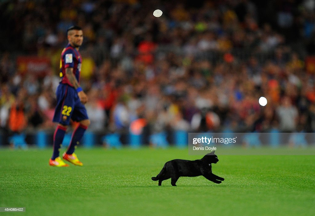 A cat invades the pitch at the start of the La Liga match between FC Barcelona and Elche FC at Camp Nou stadium on August 24, 2014 in Barcelona, Spain.