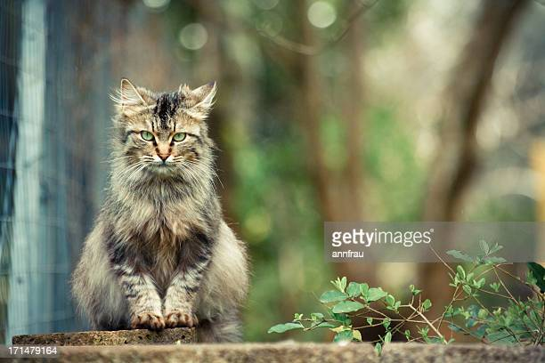 a cat is a lion in a jungle of small bushes - annfrau stock pictures, royalty-free photos & images