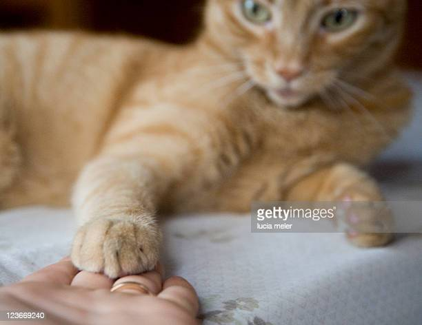 Cat is giving five to human