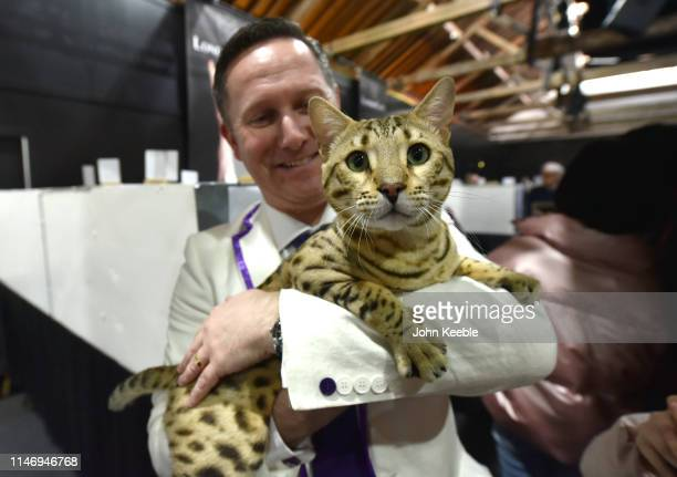 A cat is held at the LondonCats International Show and Expo at Tabacco dock on May 04 2019 in London England LondonCats is an official TICA Cat Show...