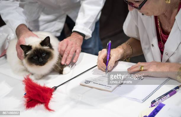 A cat is inspected by a judge during the Supreme Cat Show on October 28 2017 in Birmingham England The oneday Supreme Cat Show is one of the largest...