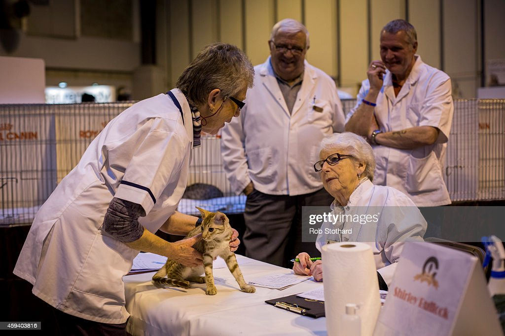 The Feline World Gathers For The Supreme Cat Show 2015 : News Photo