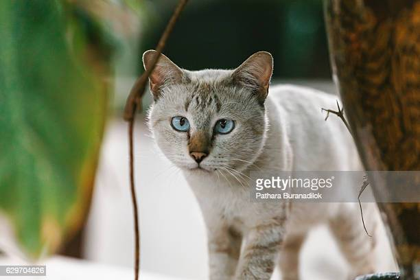 Cat is looking to you