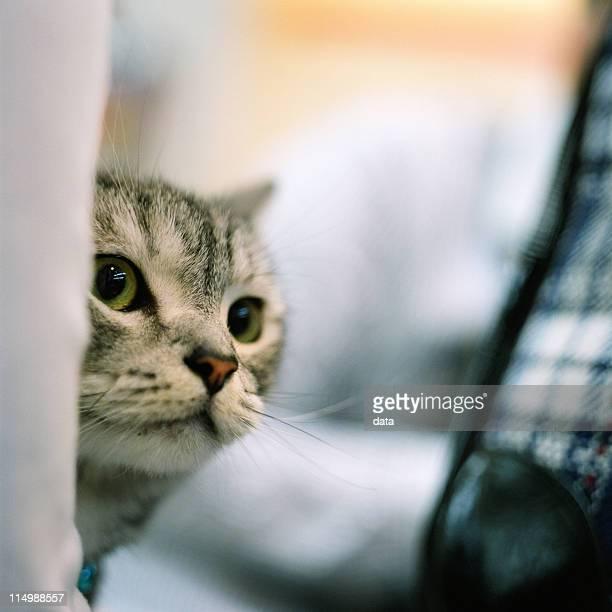 Cat is peeping
