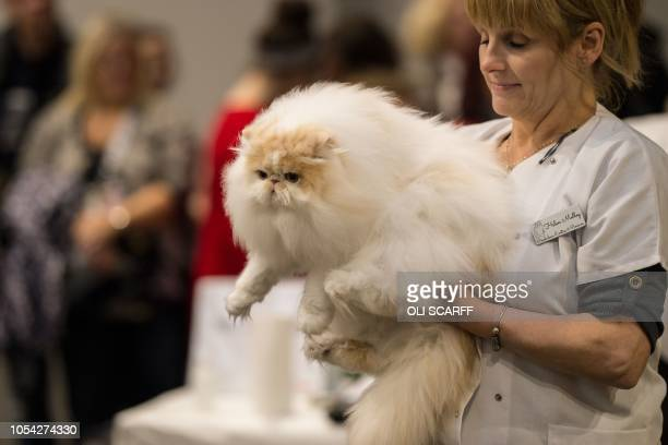 A cat is returned to its pen after being judged in the 'Tabby/Smoke/Cameo White Persian' class at the 42nd 'Supreme Cat Show' organised by the...