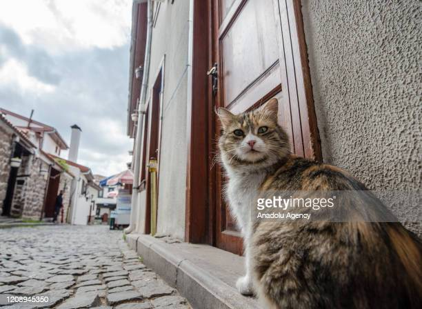 A cat is seen in an empty street near Ankara Castle after authorities urging people to stay home as part of coronavirus precautions in Ankara Turkey...