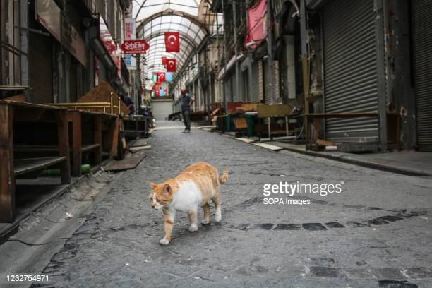 Cat is seen on an empty street during the lockdown. The Turkish government has approved a full lockdown, which will last until May 17, to reduce...