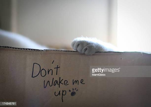 Cat is sleeping in the box