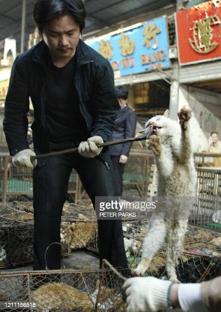 Cat is thrown into a cage destined for the dinner table in Xin Yuan wild animal market in the southern Chinese city of Guangzhou, 06 January 2004....