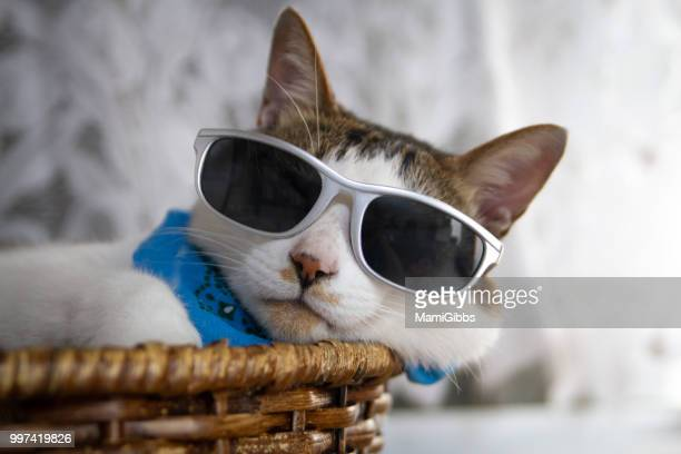 cat is wearing sunglasses - july stock pictures, royalty-free photos & images
