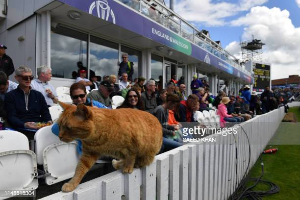 A cat joins the spectators during the 2019 Cricket World Cup group stage match between Afghanistan and New Zealand at The County Ground in Taunton...