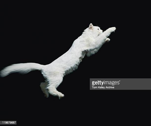 Cat jumping in air