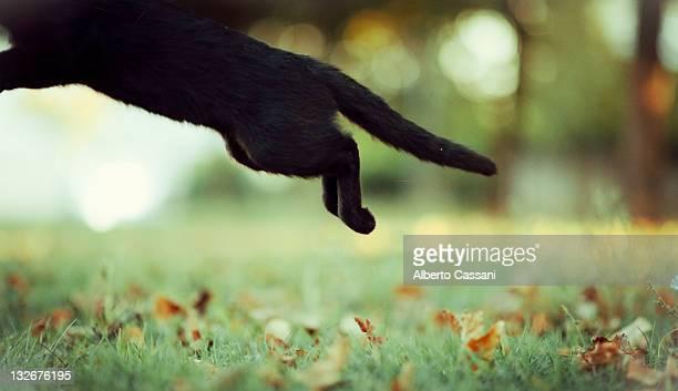 Cat jumping over grass