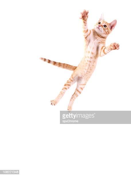 Cat ジャンプ