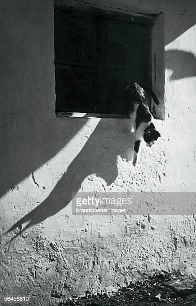 A cat jumps out of a window Photography around 1930 [Schatten an einer Mauer Katze springt aus einem Fenster Photographie um 1930]