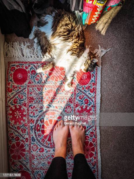 cat laying down on a colourful rug next to a clothes hanging rail. picture taken looking down, the feet of a model are in the picture. - tattoo stock pictures, royalty-free photos & images