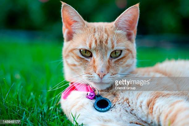 Cat laying in the grass.