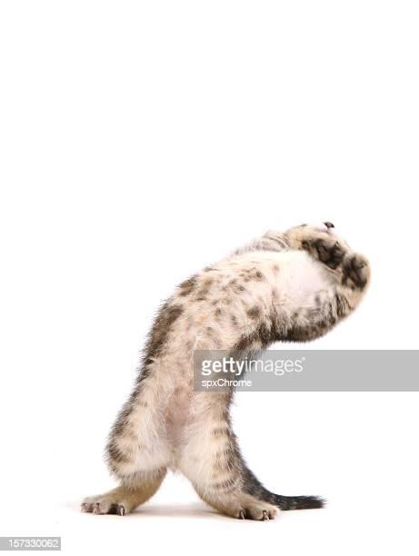 Cat schiefen Rücken