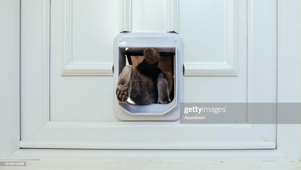 Katze aus dem Haus durch Katzenklappe : Stock-Foto