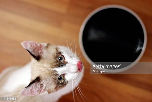 cat licking his whiskers - lambendo os lábios - fotografias e filmes do acervo