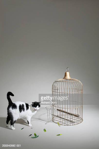 Cat licking lips, with feathers beside empty cage, (digital composite)