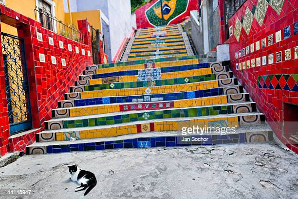 A cat lies on Selaron's Stairs a colorful mosaic tile stairway on February 12 2012 in Rio de Janeiro Brazil World famous staircase mostly covered by...