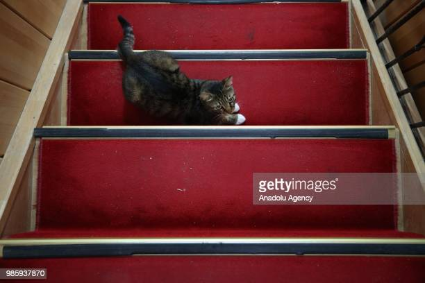 A cat lies on the stair at Esenkoy Town Municipality building at Cinarcik district of Yalova province in Turkey on June 27 2018 Municipal officials...