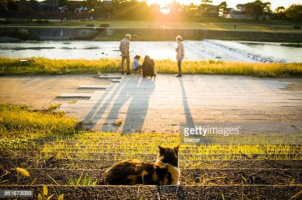 a cat looking at a family - 川岸 ストックフォトと画像