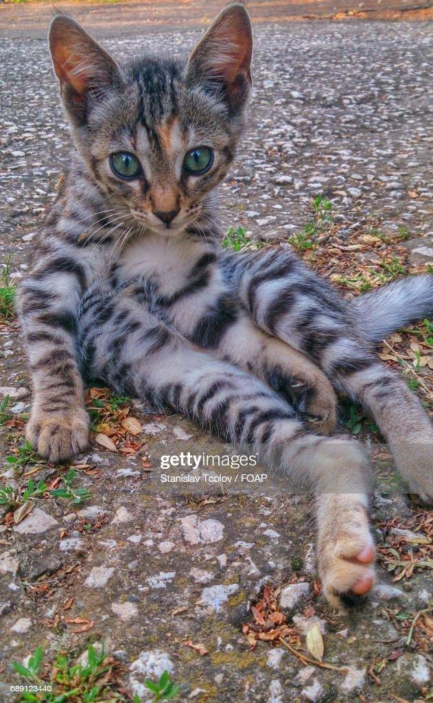Cat looking at camera : Stock Photo
