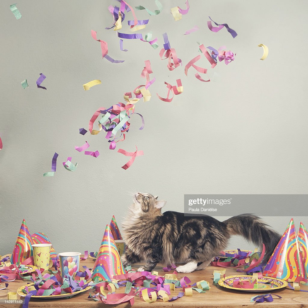 Cat looking at flying confetti : Stock Photo