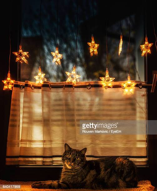 Cat Looking At Illuminated Star Shape Christmas Lights At Home