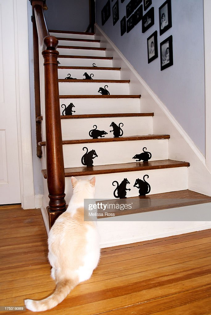 Cat Looking At Mice On A Stairway. : Stock Photo
