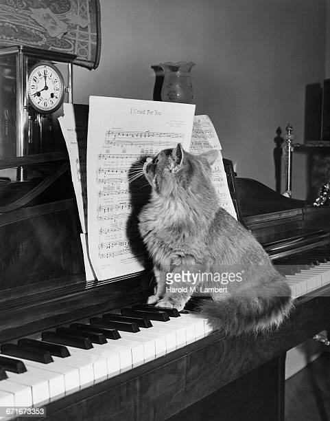 Cat Looking At Musical Notes While Playing Piano