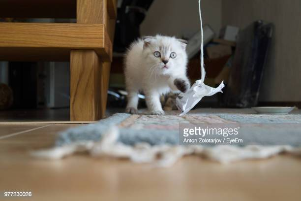 Cat Looking At Paper In Home