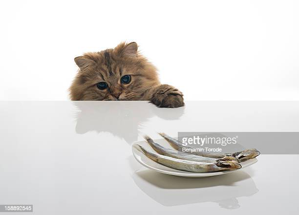Cat looking at plate of fish on table