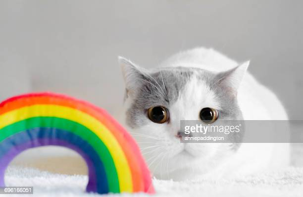 Cat looking at rainbow toy