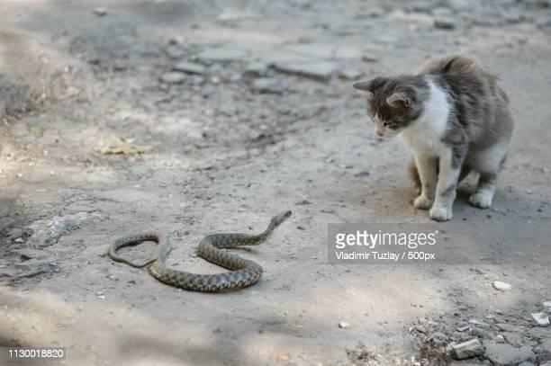 Cat looking at snake