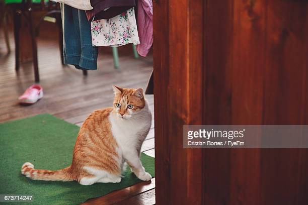 cat looking away while on floor - bortes stock-fotos und bilder