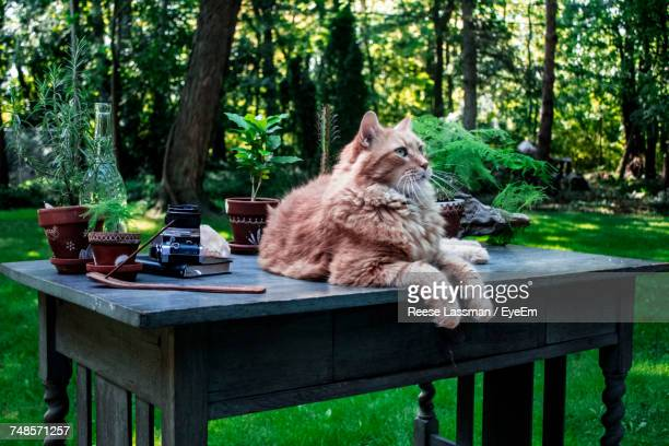 Cat Looking Away While Resting On Table At Yard