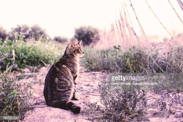 Cat Looking Away While Sitting On Field