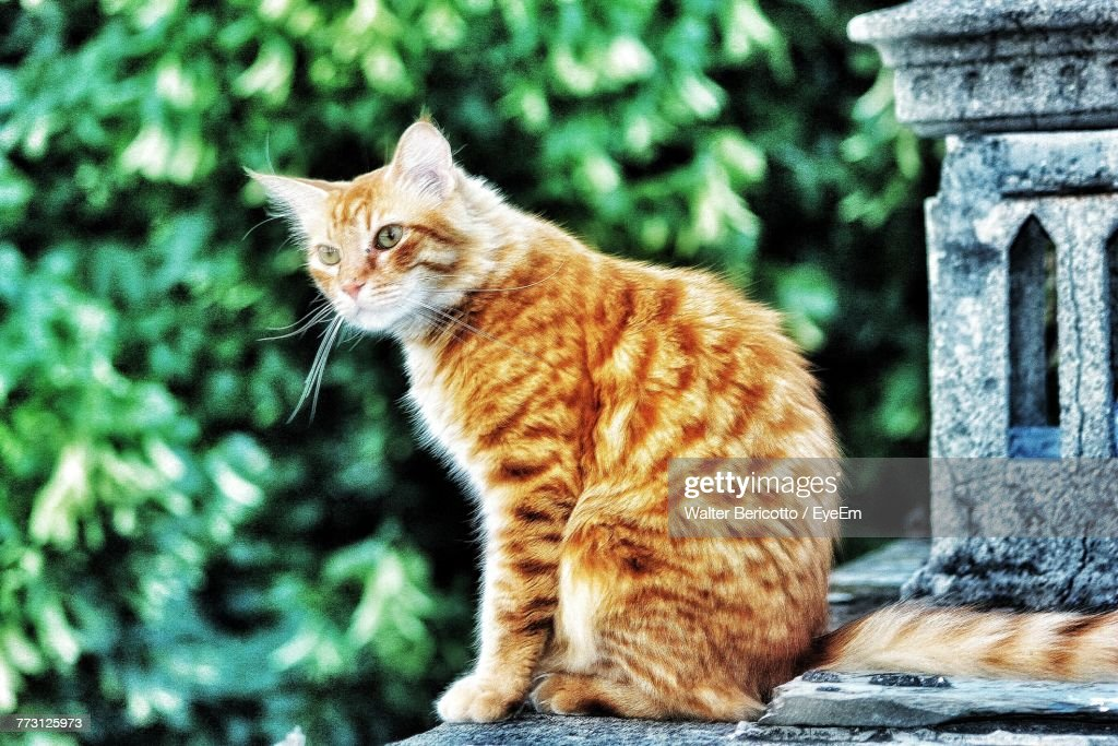 Cat Looking Away While Sitting Outdoors : Stock Photo